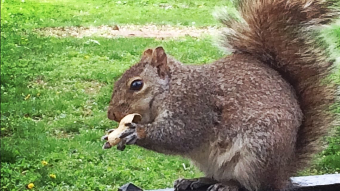 Baby Eichhörnchen Dylon